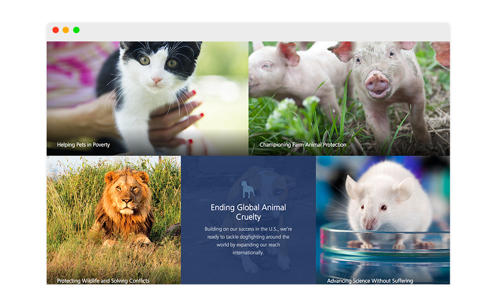 Image: HSUS Home